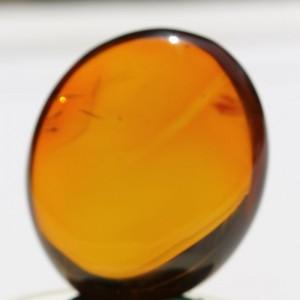 Burmese Amber - SM10