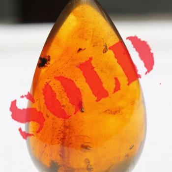 Rare Amber - SM5