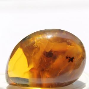 Rare Amber With Inclusions - UN3