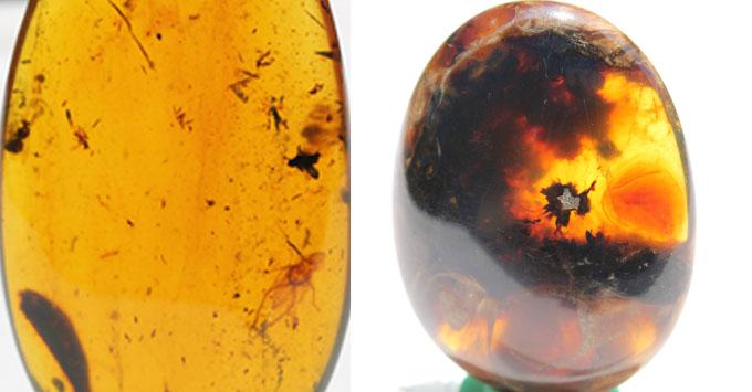 Burmite Amber Rare Amber